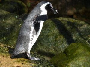 Was sind meine Stärken? Pinguin als Symbol für die Geschichte von Eckart von Hirschhausen